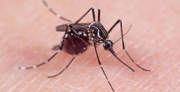 5 найбільш небезпечних хвороб, що розносяться комарами
