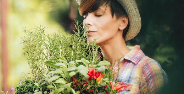 5 лікарських трав, які можуть нашкодити