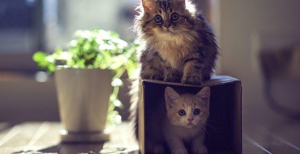 12 фактів про кішок, які мало хто знає