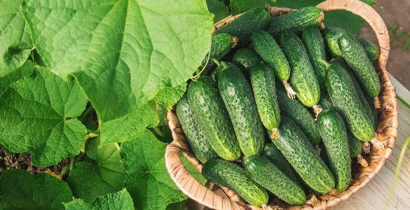 Потужним ключем до довголіття виявилися п'ять зелених продуктів