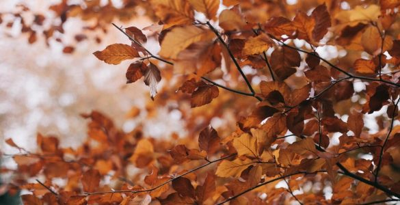 Названа незвичайна небезпека опалого листя