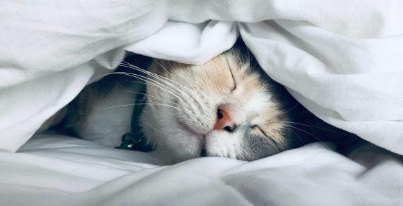 Психолог пояснила, як «читати» сни