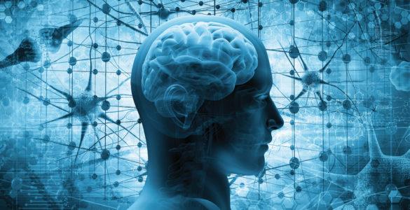 Нейробіолог пояснила, чому популярний продукт шкідливий для мозку