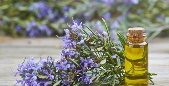 Олію відомої рослини визнали ефективним знеболюючим