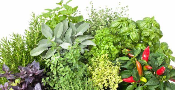 Названі найбільш корисні взимку трави