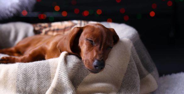 Вчені назвали небезпечні для собак популярні продукти