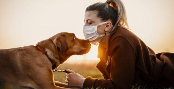 Знайдено зв'язок між регулярними прогулянками з собакою і довголіттям