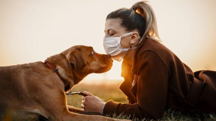 Собака і людина