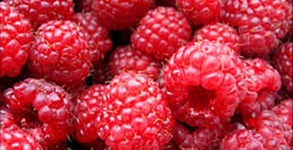 Літні ягоди: чим небезпечна малина