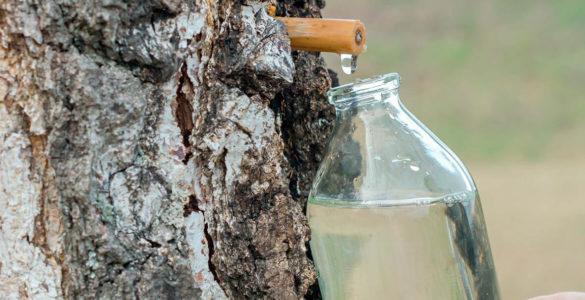 Дієтологиня розповіла про шкідливі властивості березового соку