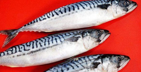 Секрет довголіття: в улюбленій багатьма рибі помітили користь для організму