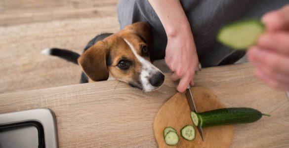 Якими продуктами зі столу можна годувати собаку, розповіли експерти