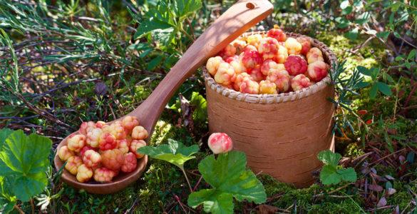 Для довголіття і від хвороб серця: названа проста, але корисна ягода