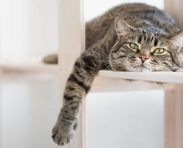 Кіт (Втома)