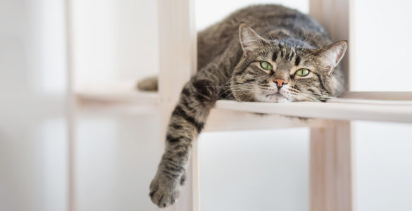 Названі основні причини постійної втоми