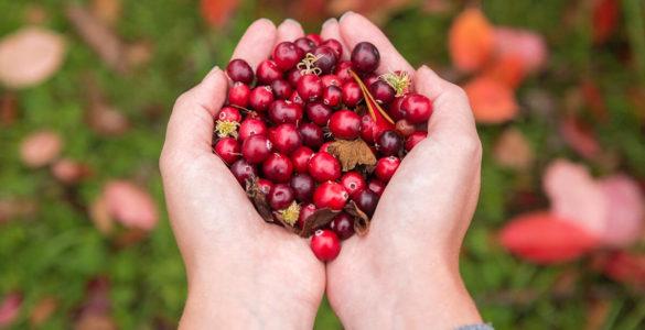 Дієтологиня перерахувала осінні ягоди, які зміцнюють імунітет