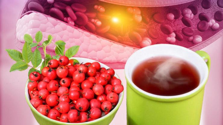 чай з глоду